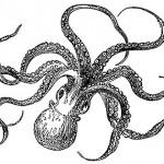 Google Octopus