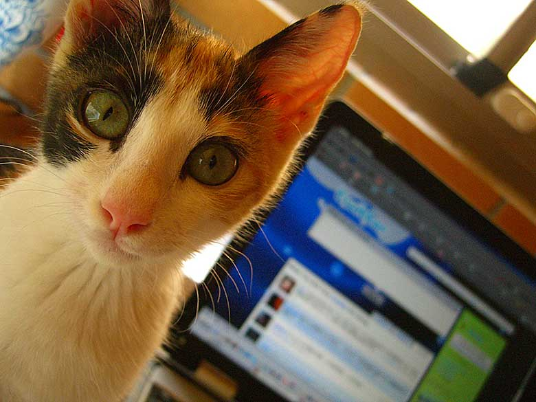 Katze am PC