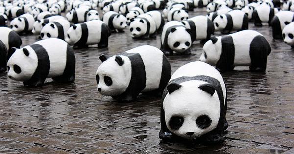 Pandas im Angriff